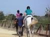 Gruppo adolescenti cavalli