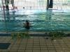 Terapia multisistemica in acqua